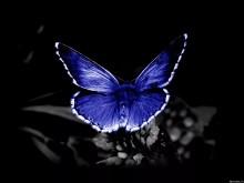 Как приманить бабочку ультрафиолетовым светом